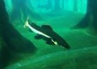 aquario_sp_01