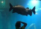 aquario_sp_03