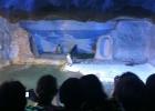 aquario_sp_07