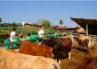 promoventos-fazenda-mae-terra-imagem-3