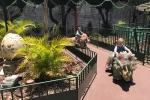 parques-tematicos-t-rex-park-imagem-5