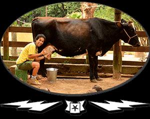 promoventos-fazendas-fazendinha-cia-dos-bichos-thumb