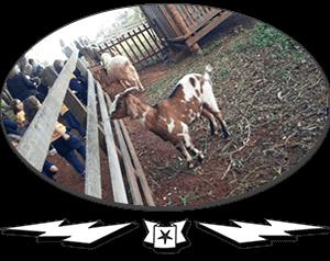 promoventos-fazendas-cheiro-do-mato-thumb